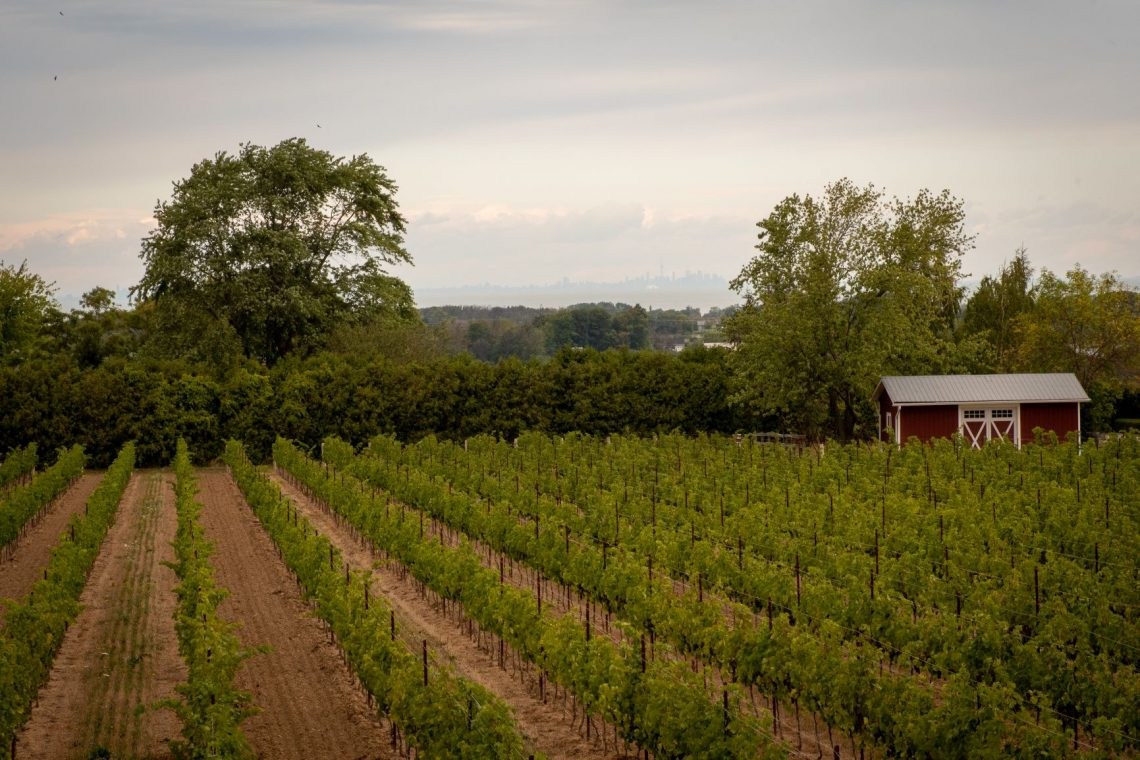 Cave Spring Vineyard lies in the Beamsville Bench sub-appellation in Beamsville, Ontario, Canada | The 5 Best Dog-Friendly Wineries in the Niagara Region
