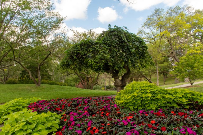 Toronto's High Park, famous for its cherry blossom trees in the springtime. High Park offers endless walking trails, beautiful lakefront views, a dog park, greenhouse and even a mini-zoo!