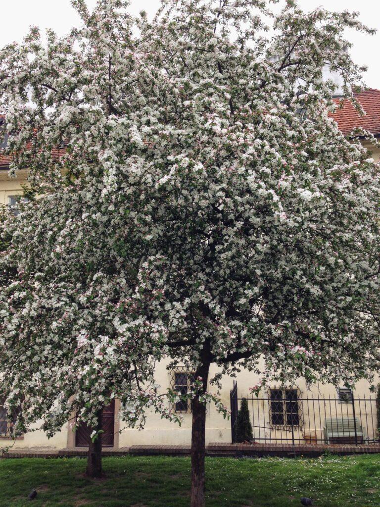 A Guide to Prague's Historical Quarters: Jewish Quarter | www.DreamPlanExperience.com