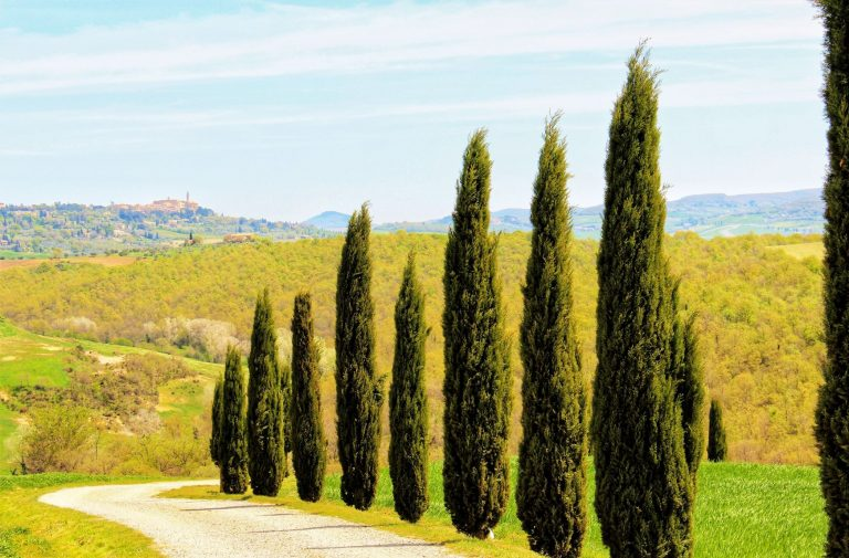 The most scenic drives are in Tuscany, Italy. Visit Tuscan Towns of Siena, Pienza, Montepulicano, Cortona, Arezzo